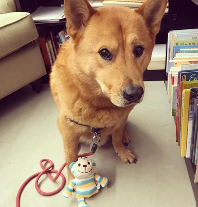 Dog book asst