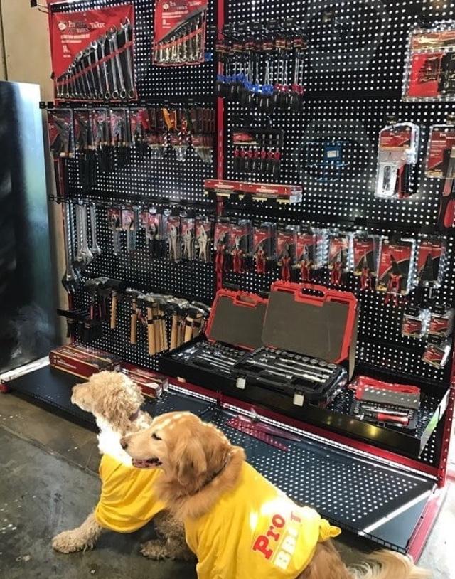 Dog hardware