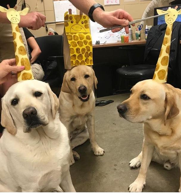 Dog puppet show