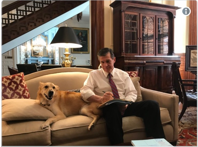 Dog reviewing bills