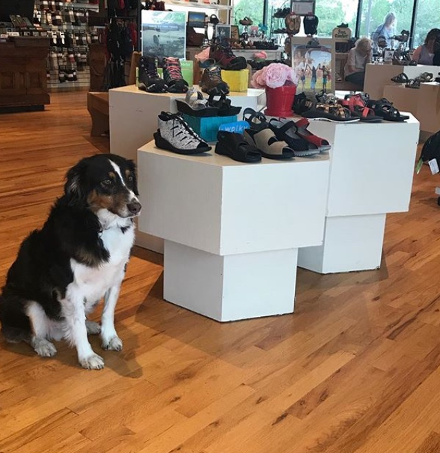 Dog shoe assistant