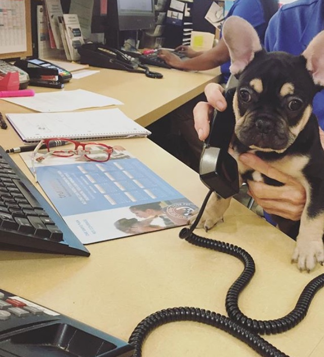 Dog telephone operator