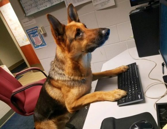 Dog working with a laptop