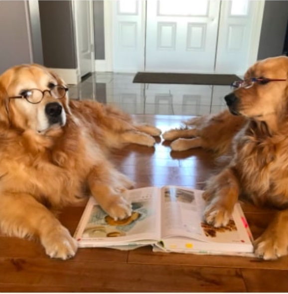 Dogs researching