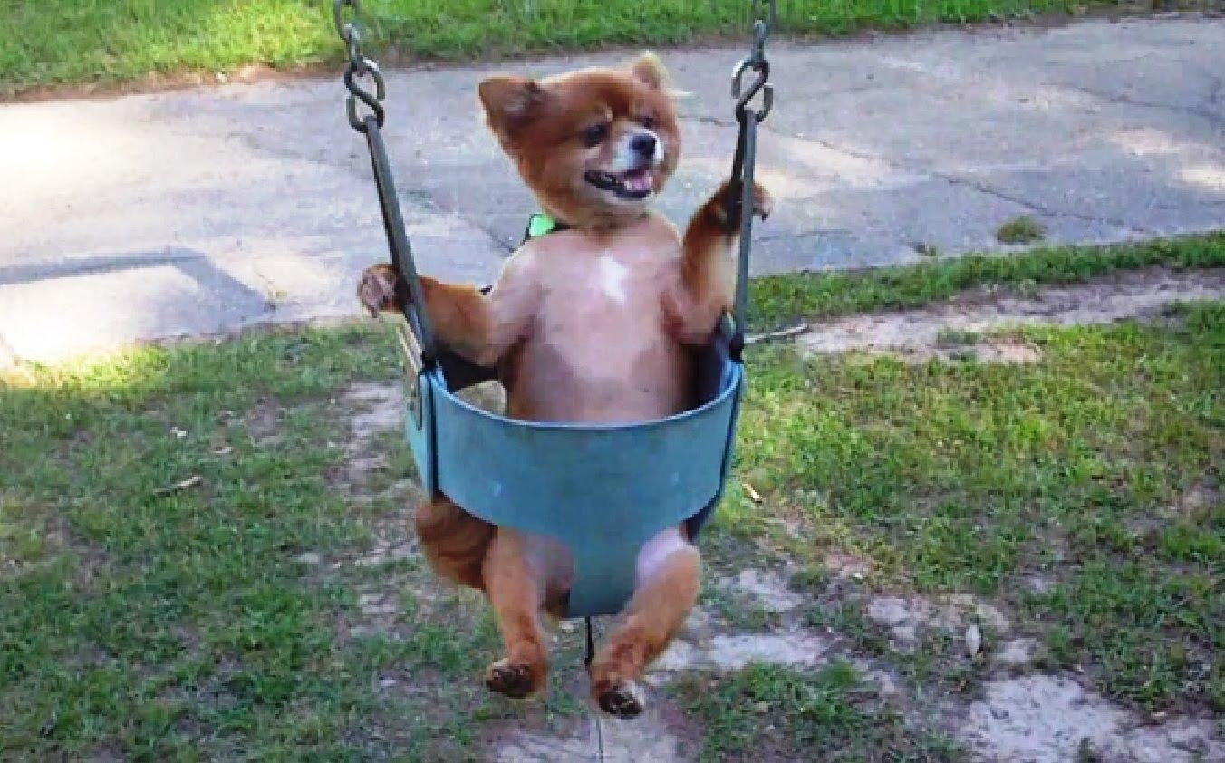 chilling dog