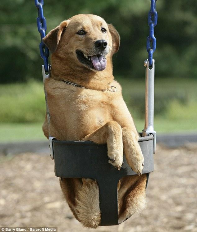 current mood dog swing