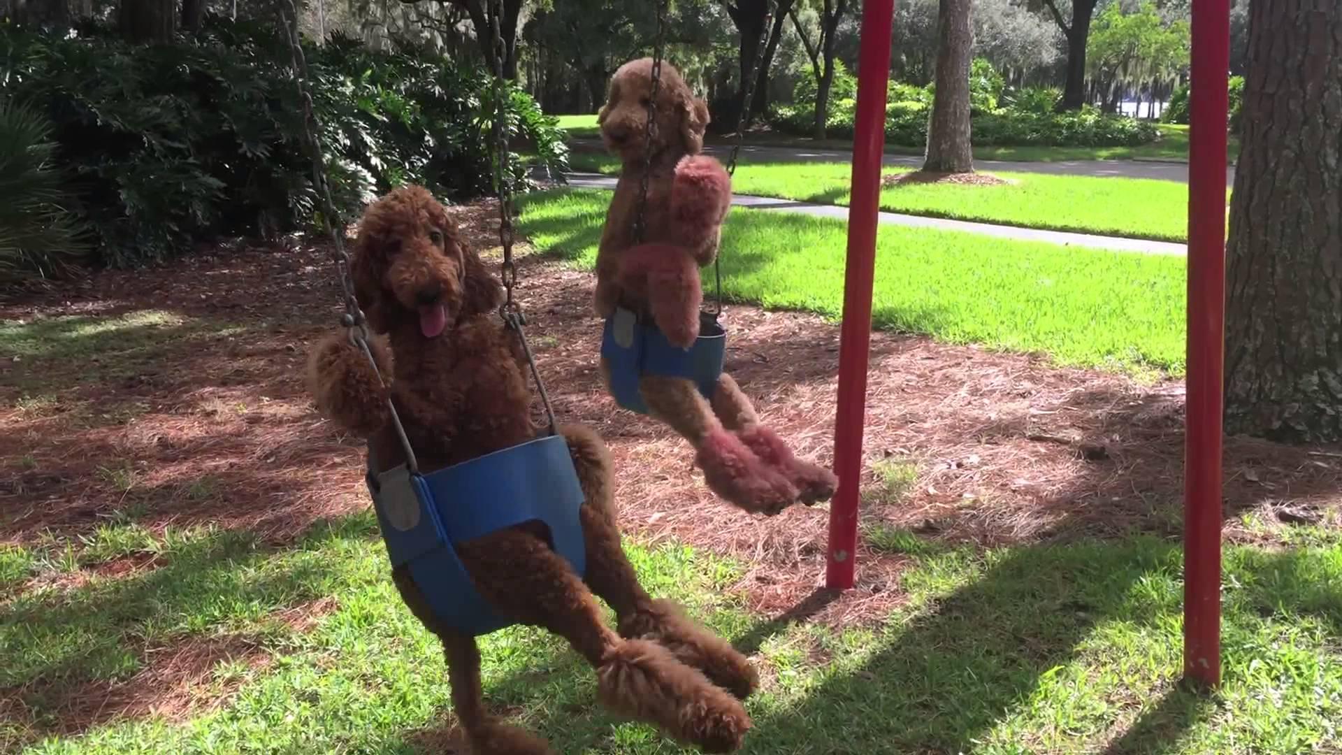 dog date in a park