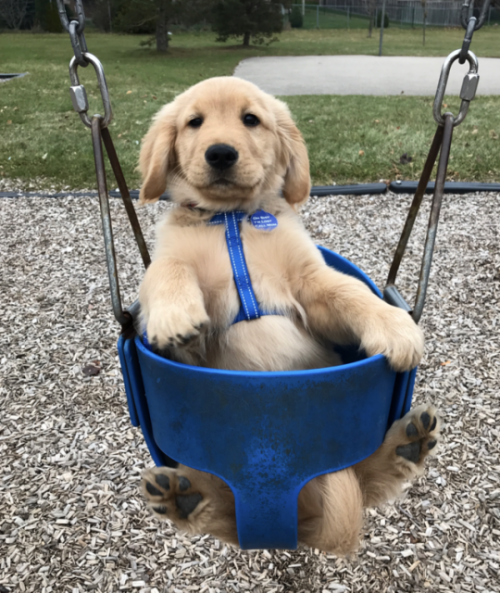 i love this chair dog
