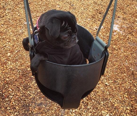 mum don't leave me - dog