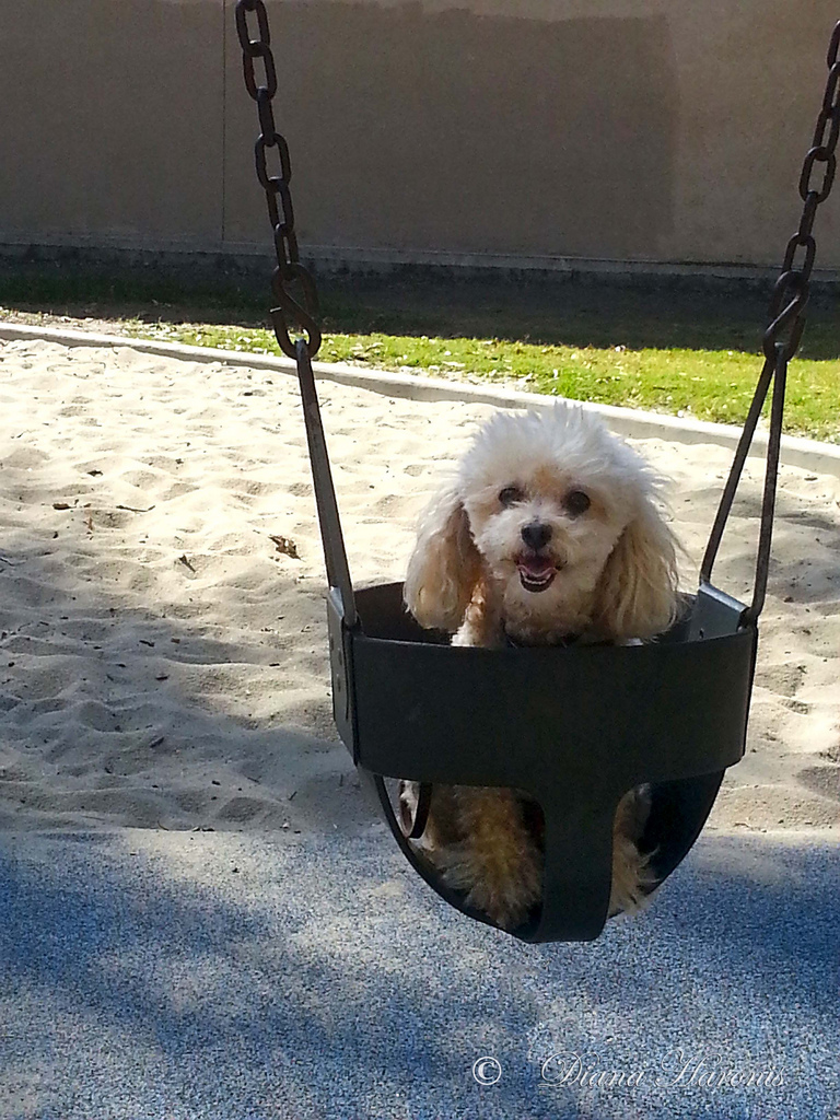 my first swing dog