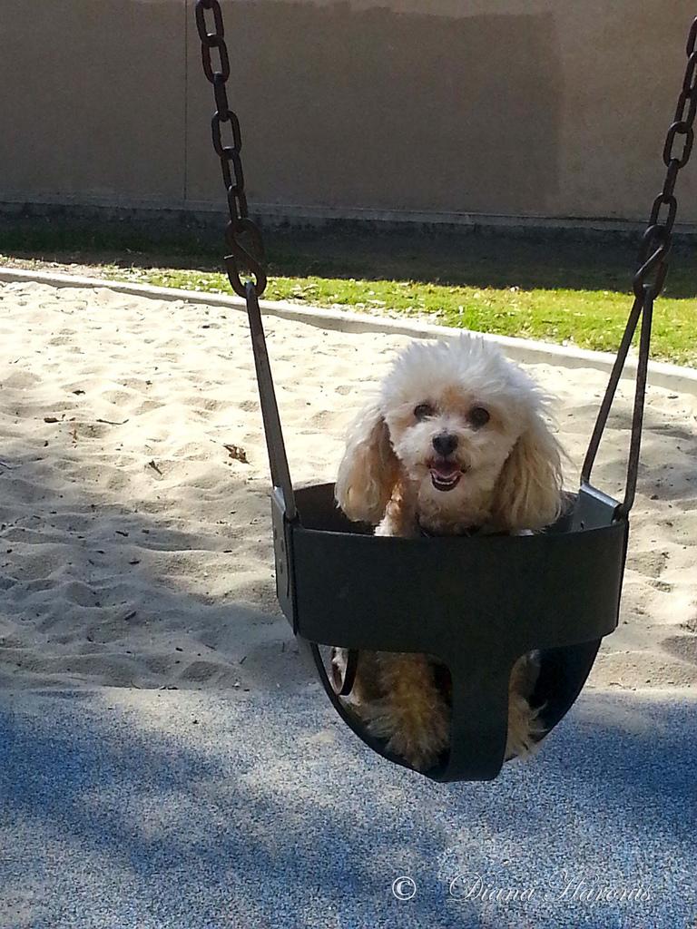 my first swing dog