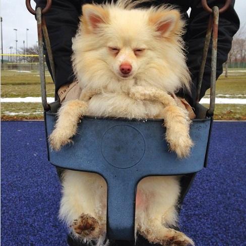 my swing dog