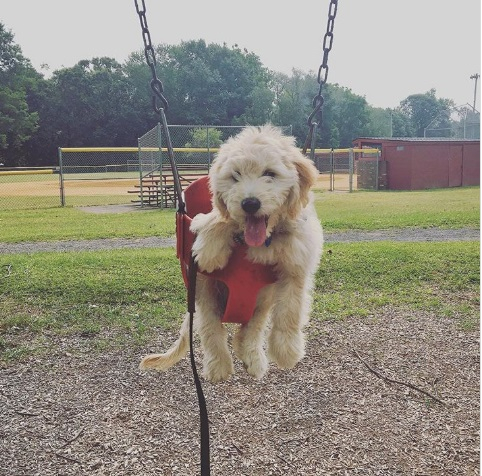 please swing me more dog