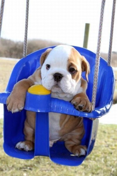 scared puppy in swing