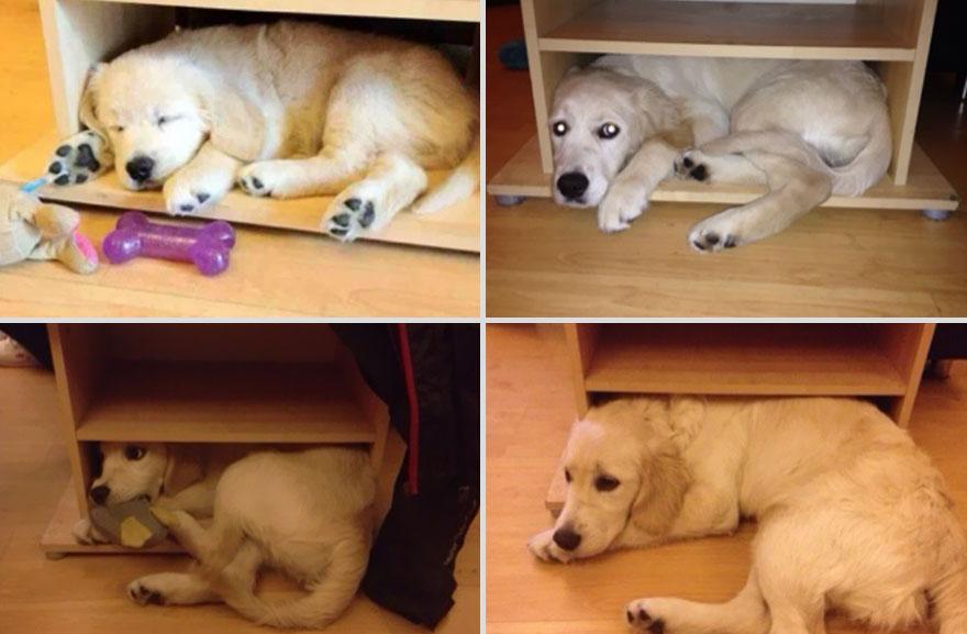 1 year apart dog cabinet