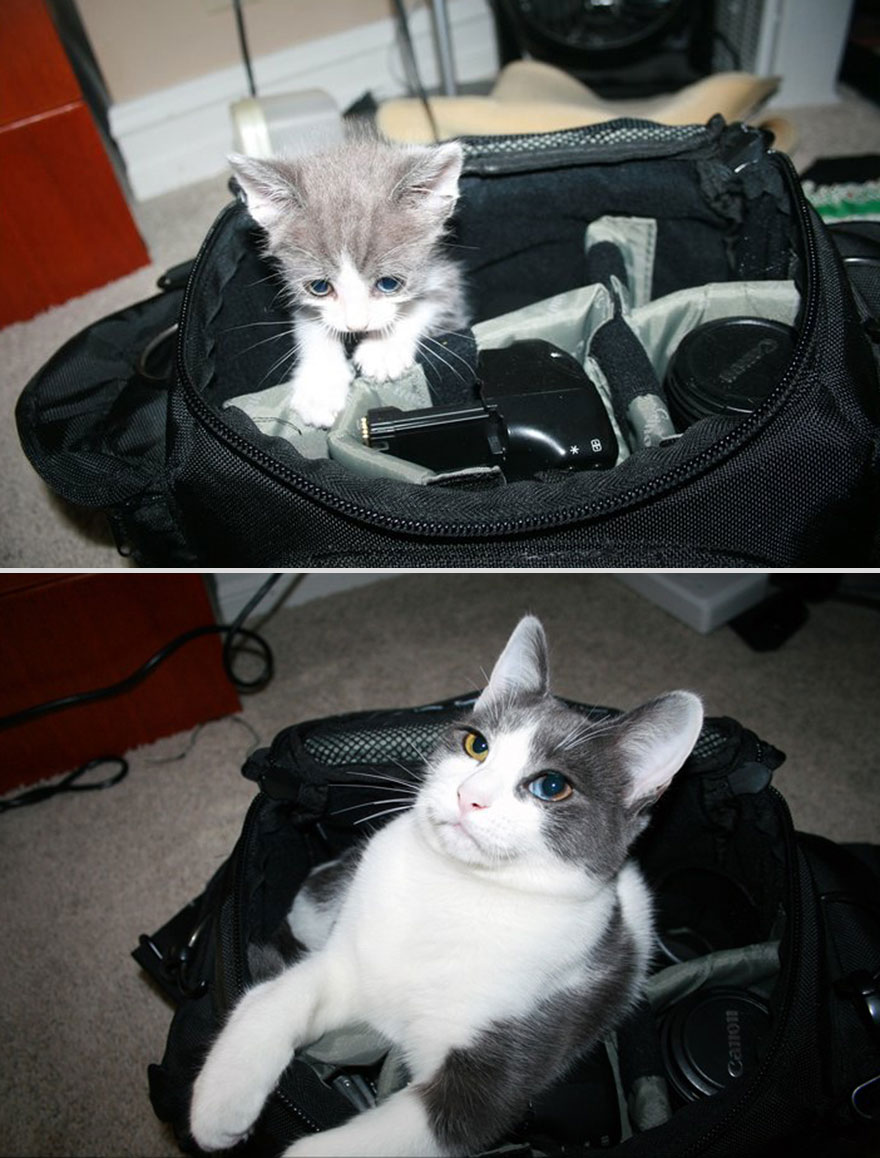 6 months apart cat