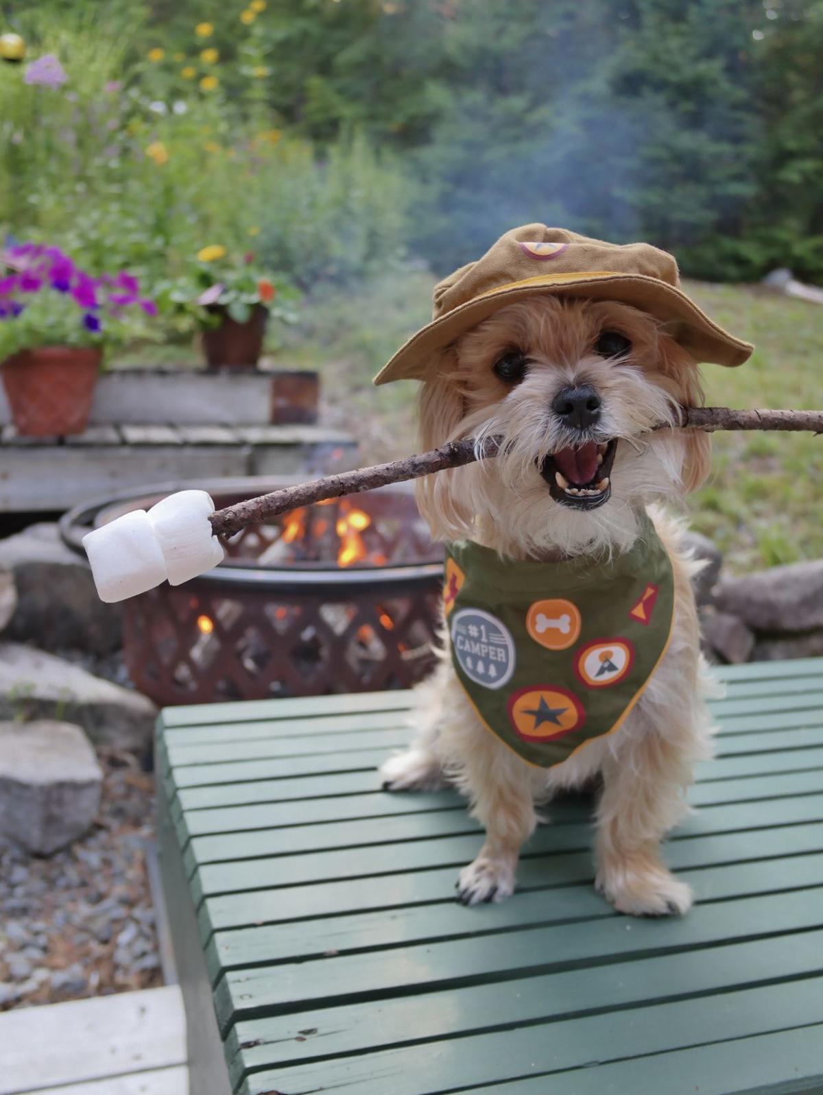 Rambo camper