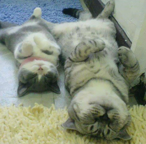 mini me sleeping cats