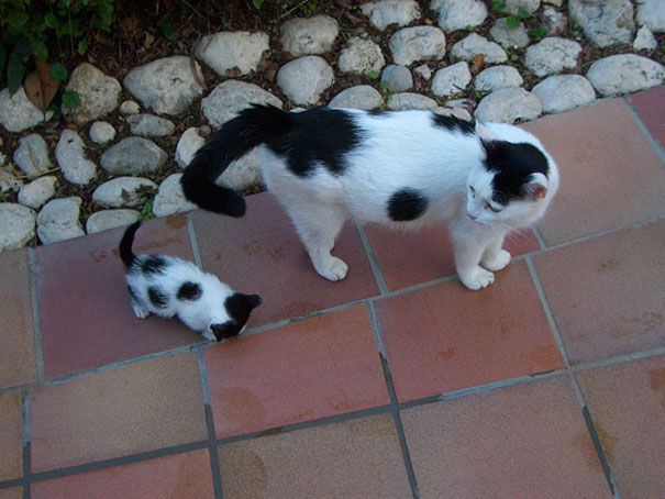 mini me spotted cats