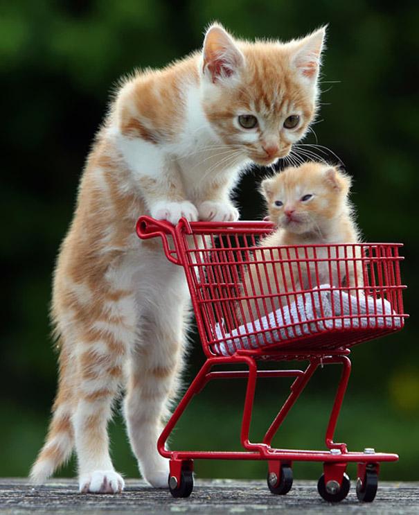 mini me super cute cats