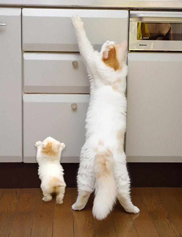 mini me white cats