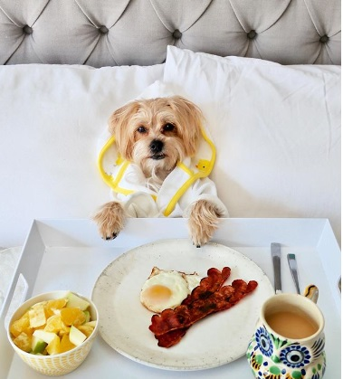 rambo breakfast in bed