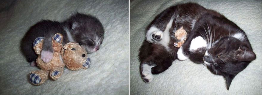 then and now cat and toy