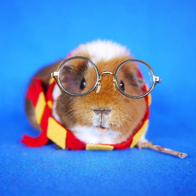 Fuzzberta Harry Potter