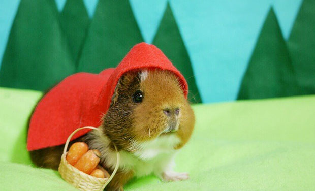 Fuzzberta Little Red Riding Hood