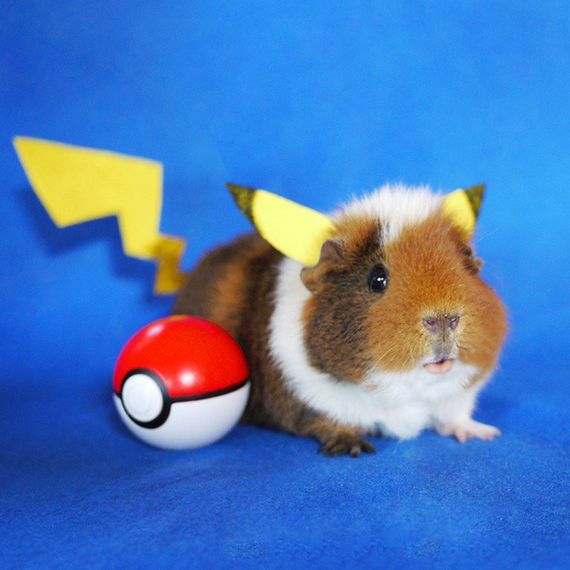 Fuzzberta Pokemon
