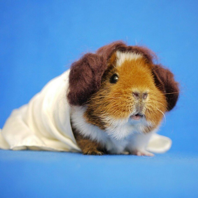 Fuzzberta Star Wars