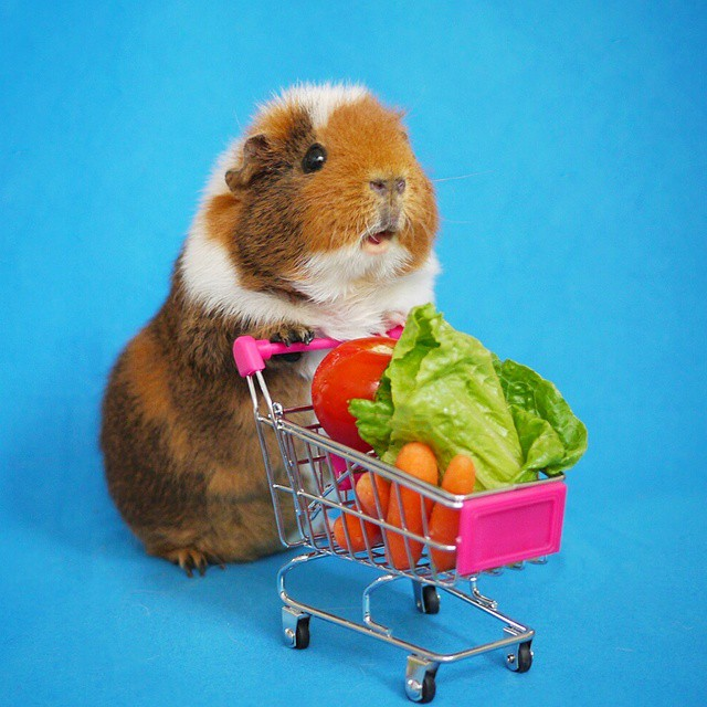Fuzzberta doing groceries