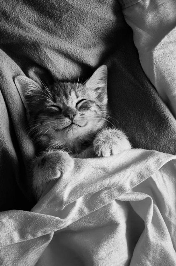 goodnight cat