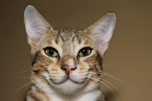 id CAT