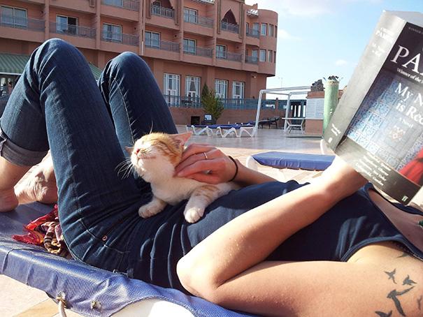 massage cat