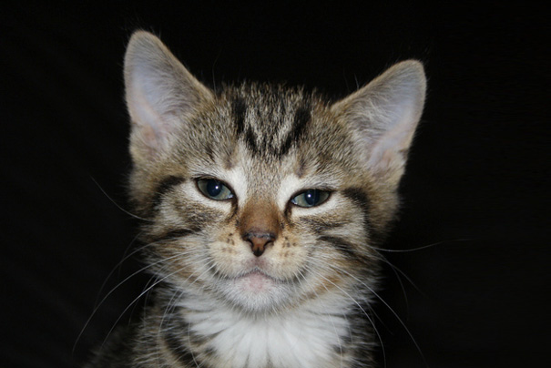 not so happy but smiling cat