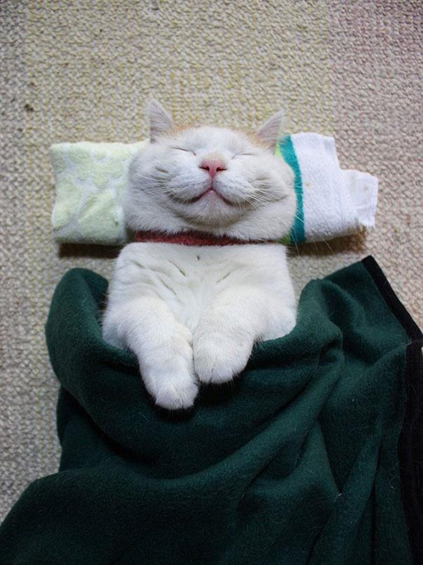 sleepiest cat