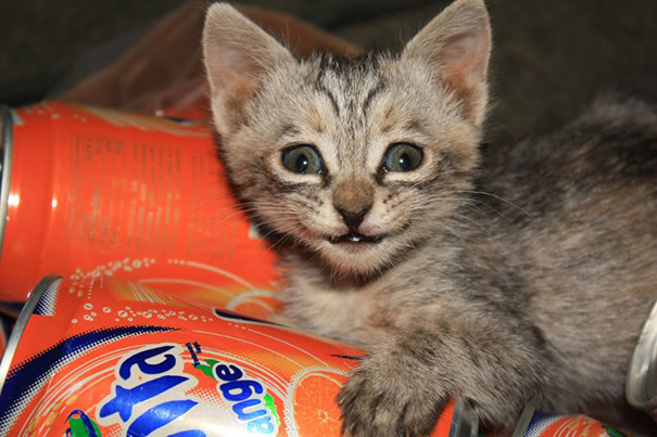 smiling kitten in soda