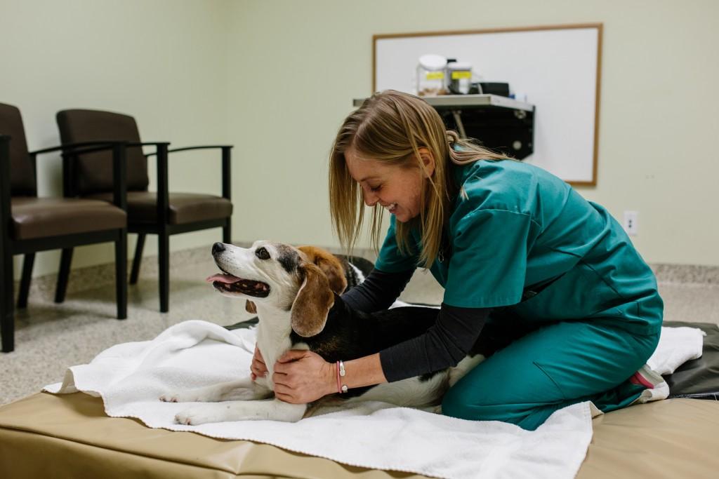 Beagle enjoying massage