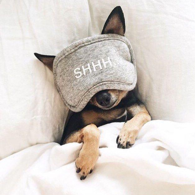 Dog sleep is life