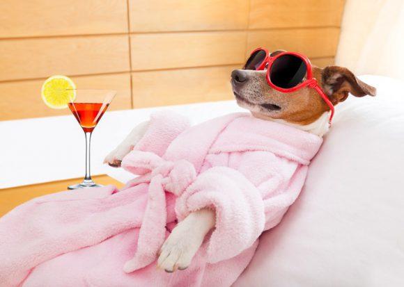 Dog with martini