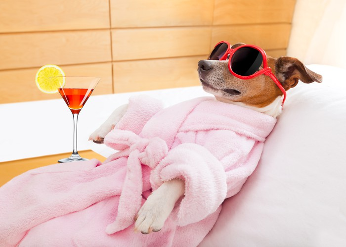 Dog with martini