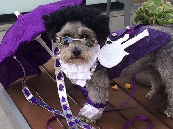 Purple Rain tribute to late Prince