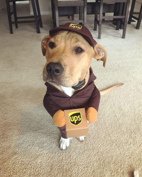 UPS delivery dog 2