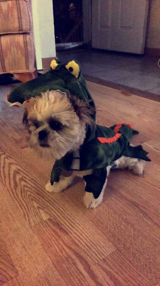 alligator dog