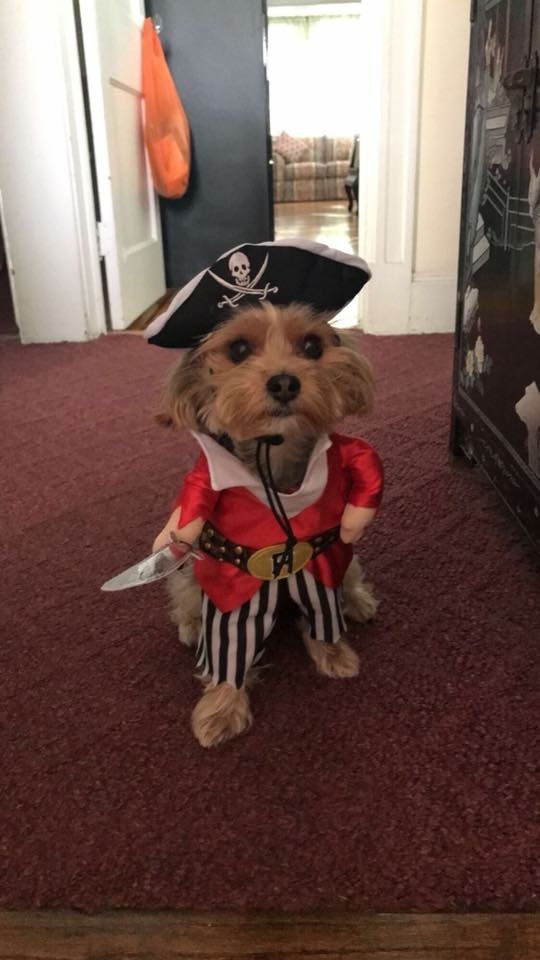 another pirate dog