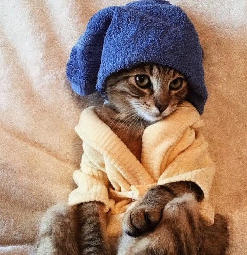 cat came out from the shower