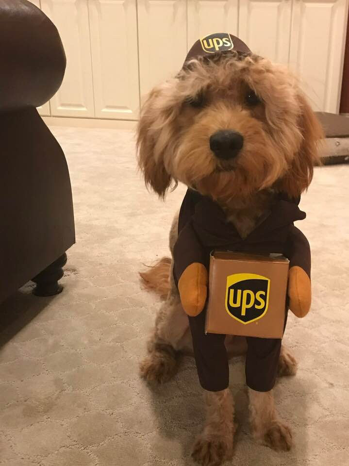 delivery pet