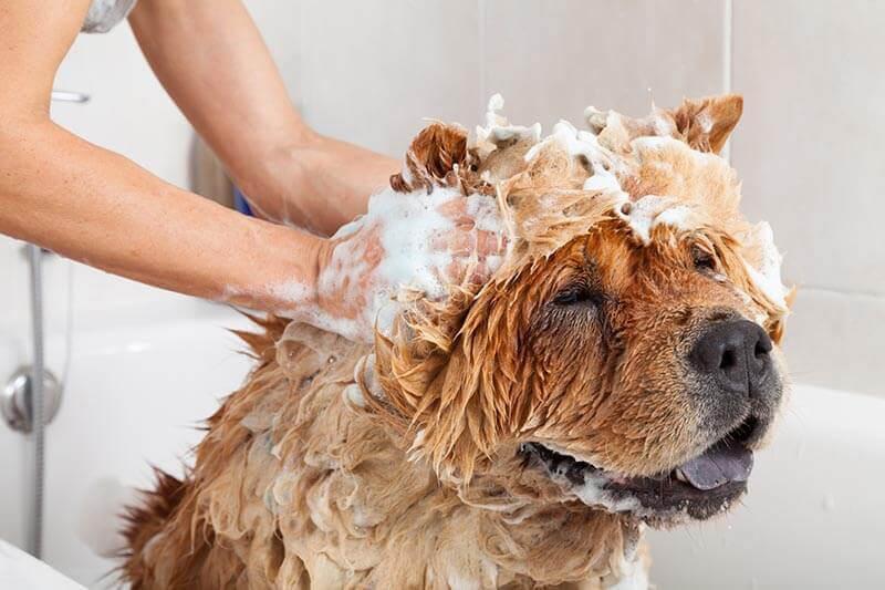 dog grooming wash