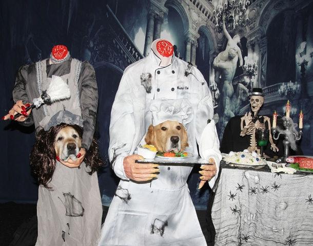 headless waiters dog
